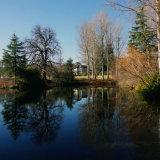 Morning Light on the Pond