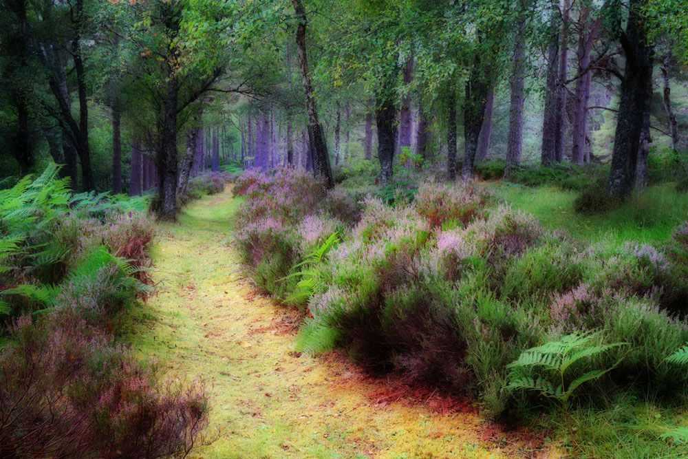 The Heather Path