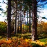 Tall Tree's