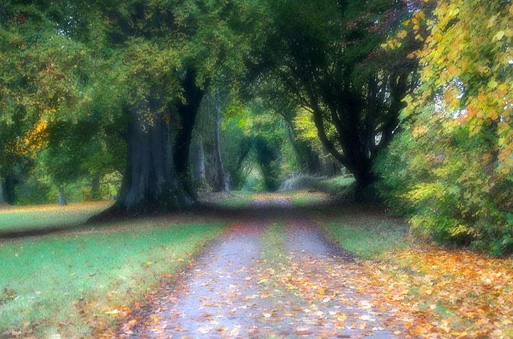 Leafy Autumn Lane