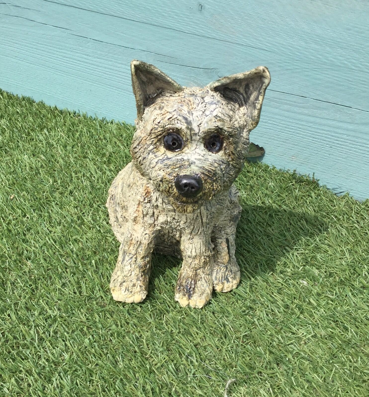 Sitting Cairn Terrier