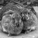Wild Rabbit Kits - Maggie Slingsby