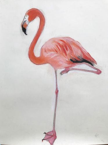 Snoozing flamingo