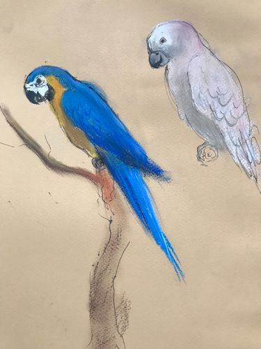 Study of macaws
