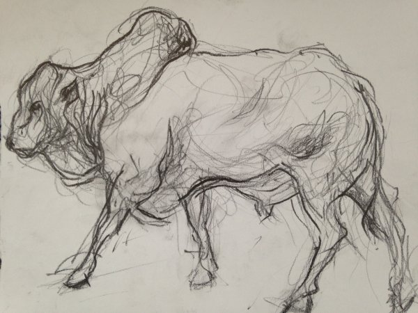 Boran cow, Kenya, unframed