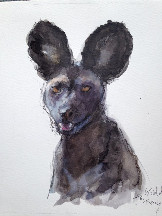 Portrait of an African Wild dog