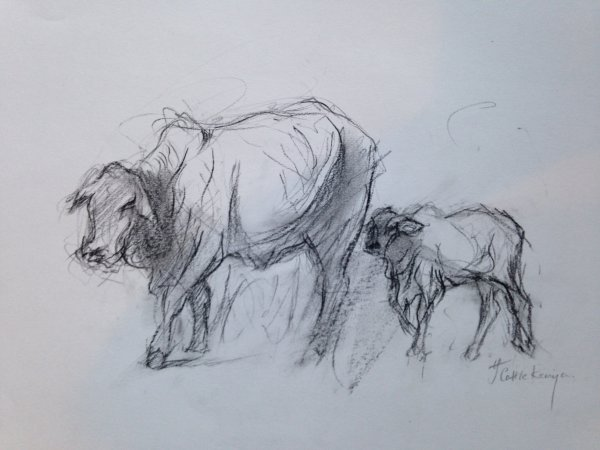 Study of Kenyan cattle on the move