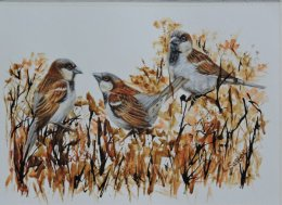The Hedgerow Sparrows