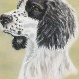 Black and White Spaniel. Sue Cartwright