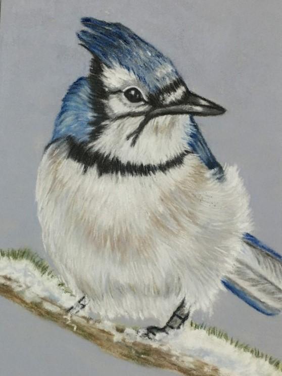 Blue Jay. Sue Cartwright