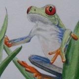Green Eyed Frog.   Meirion Hughes