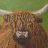 Highland Cow.  Linda Davies