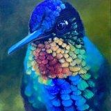 Nature's Jewel,Humming Bird, Jackie Walter