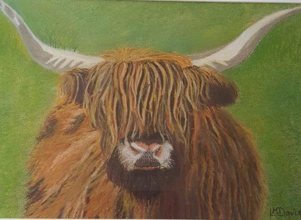 Linda Davies Highland Steer. Pastel
