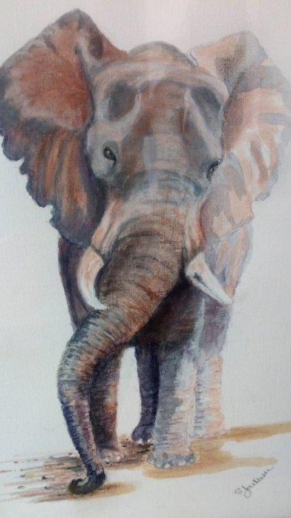 Sandra Jackson. Elephant. Mixed