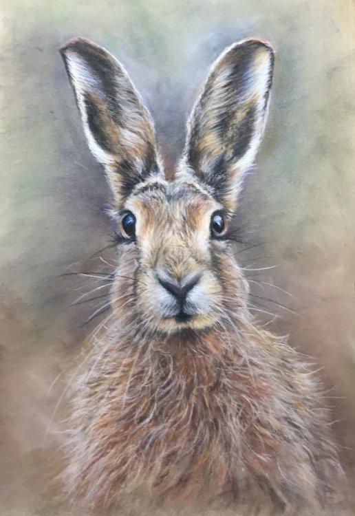 Jeni Taylor. March Hare.  Pastel