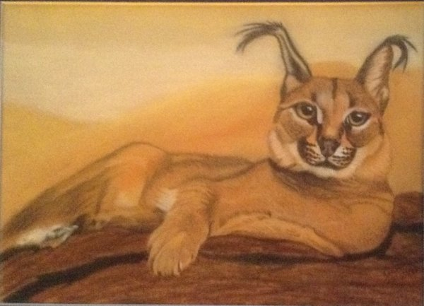 Jean Walker. Desert Caracal. Pastel