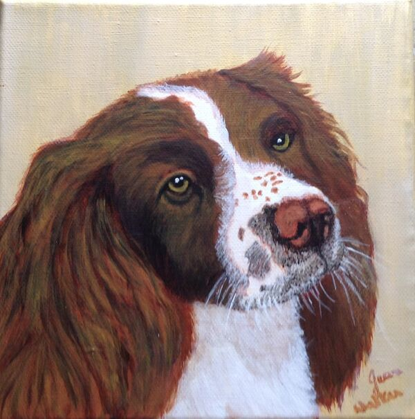 Jean Walker. Springer Spaniel. Acrylic 8'x8' canvas. £30.  ( Also available in print @ £20)