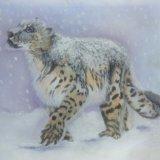 Snow Leopard.  Jean Walker