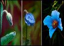 Emerging Bloom