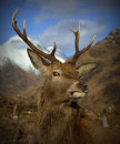 The Next Monarch of the Glen!