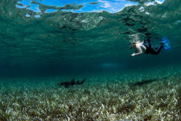 snorkelling advice