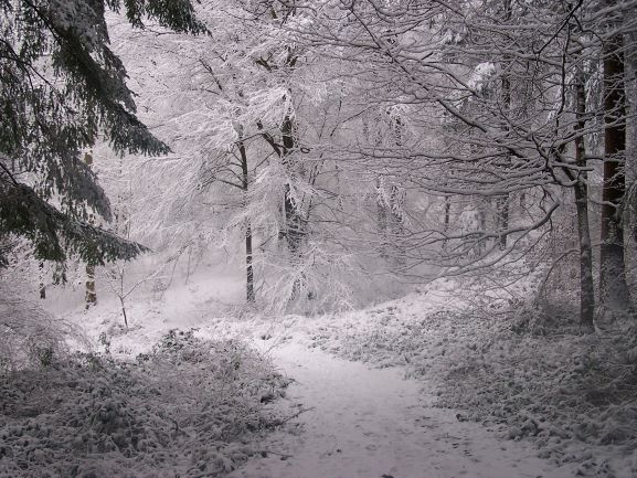 A Snowy Forest At Home