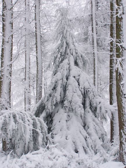 A Beautiful Winter Scene