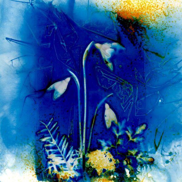 Cyanotype 3223.jpg cropped