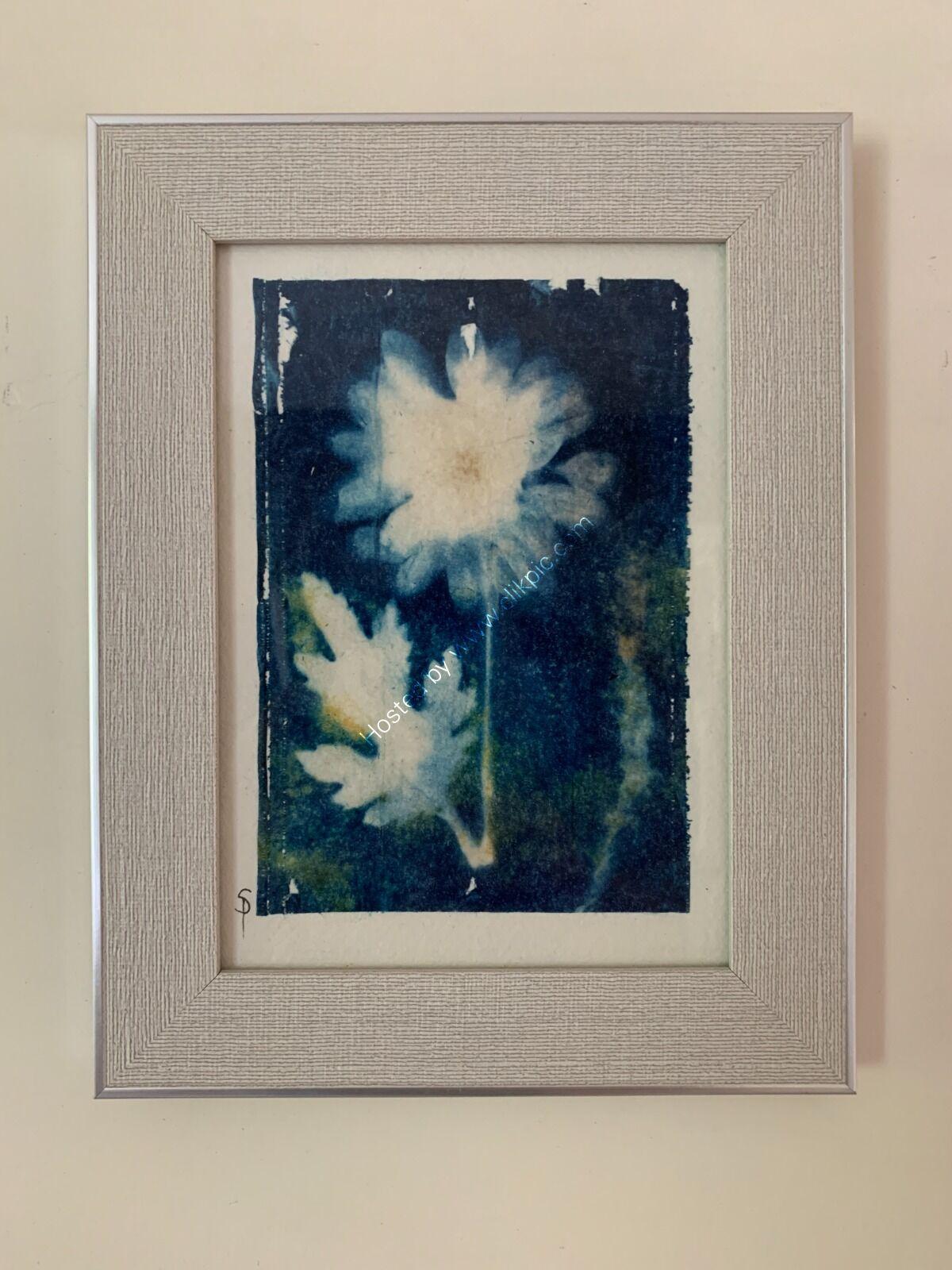 Original Cyanotype - Open Crysanthemum