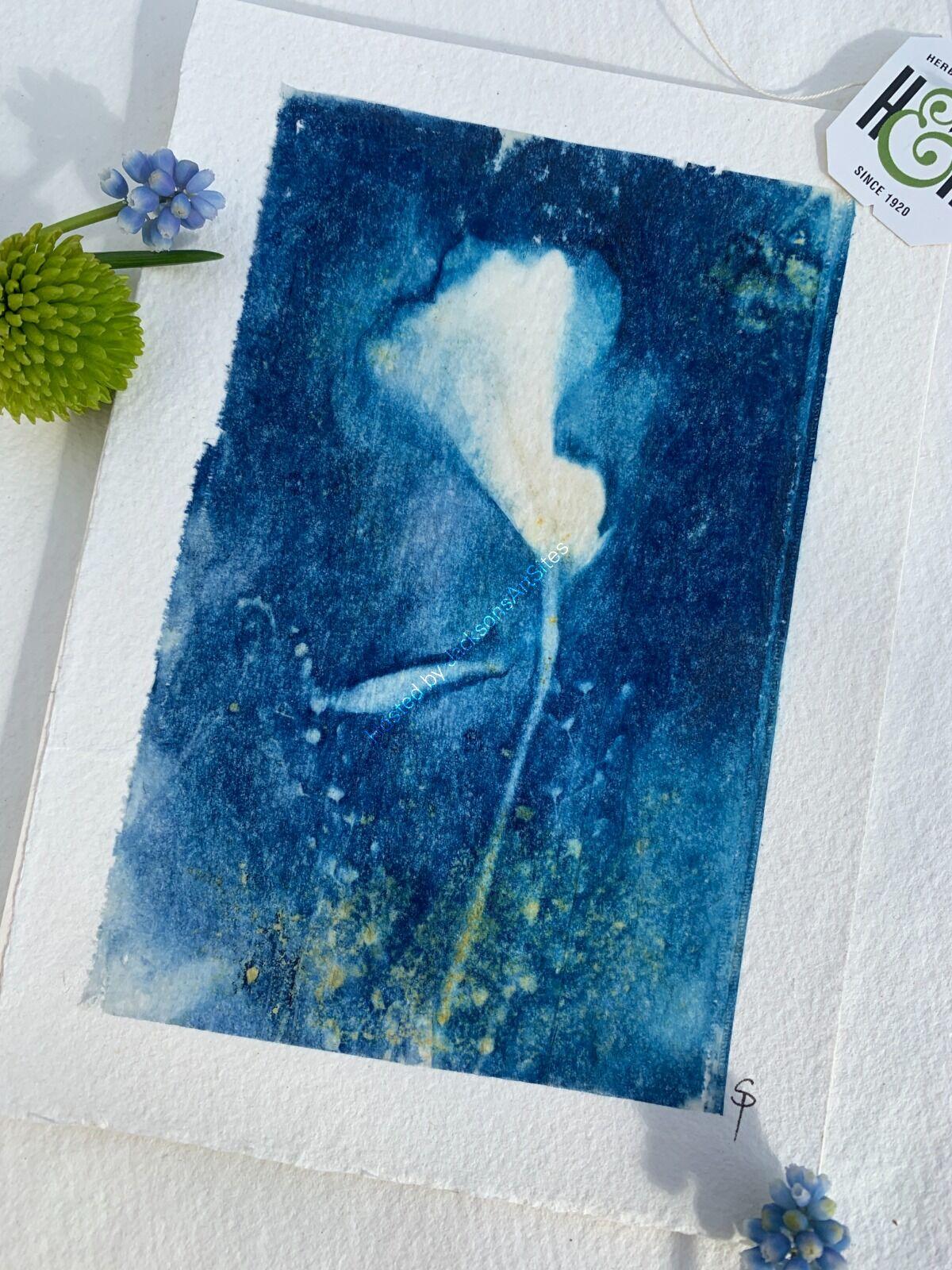 Original Cyanotype - Peruvian Lily - Unframed