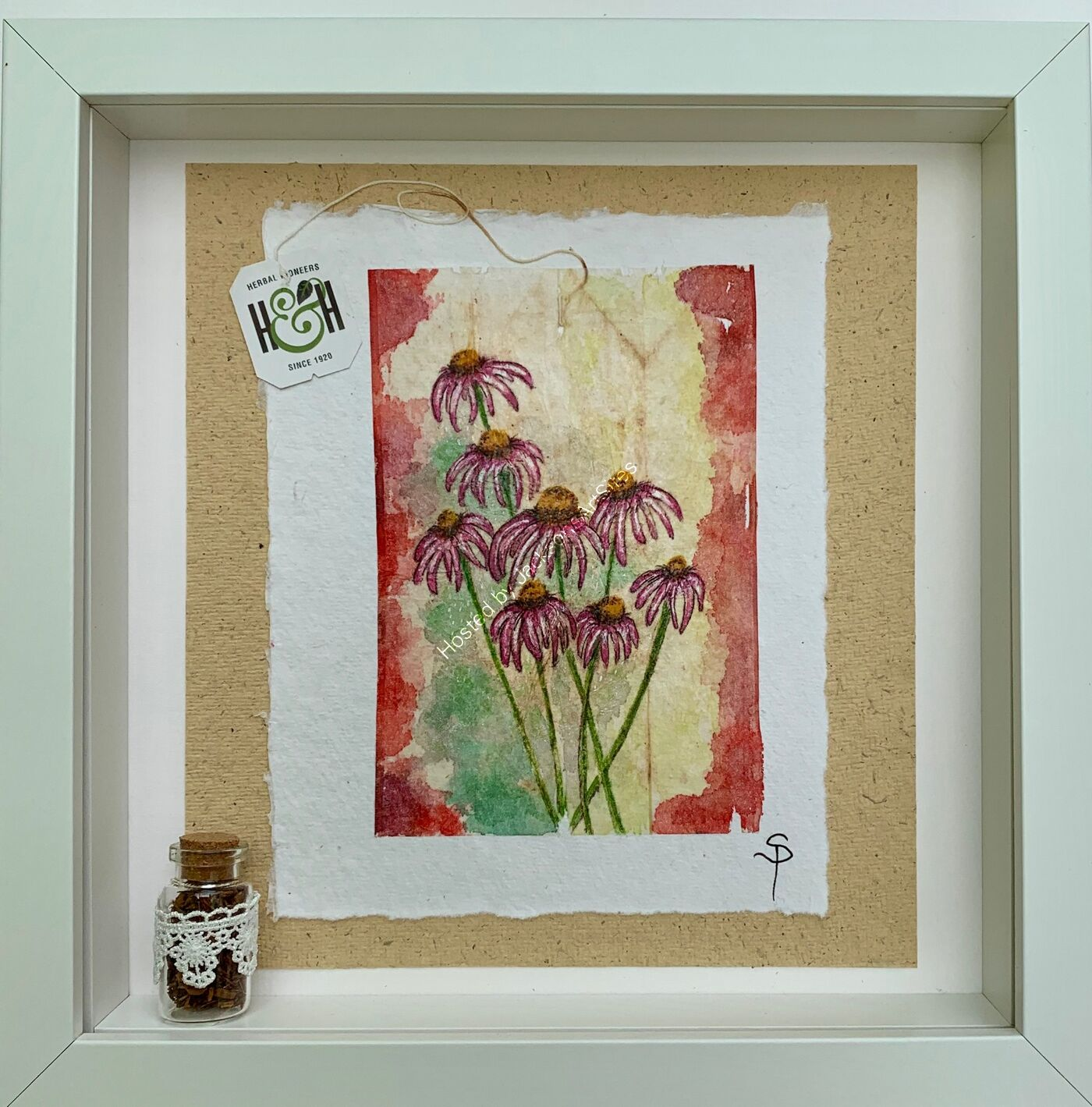 Echinacea Beauty - Original Herbal Tea Bag