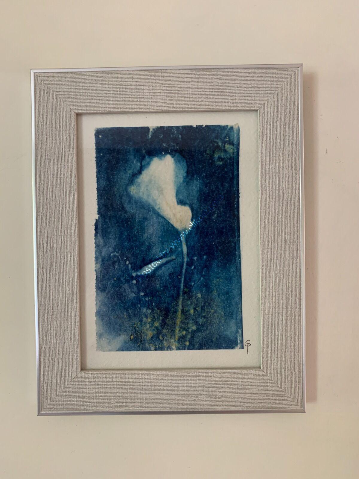 Original Cyanotype - Peruvian Lily