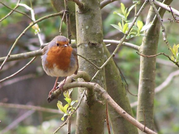 Hello Little Robin