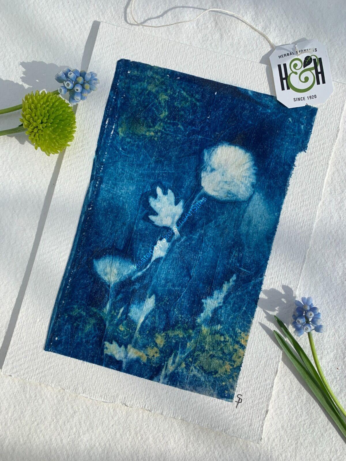 Original Cyanotype - Mini Crysanthemum Unframed