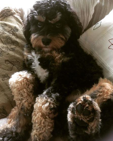 My Little Man Teddy!
