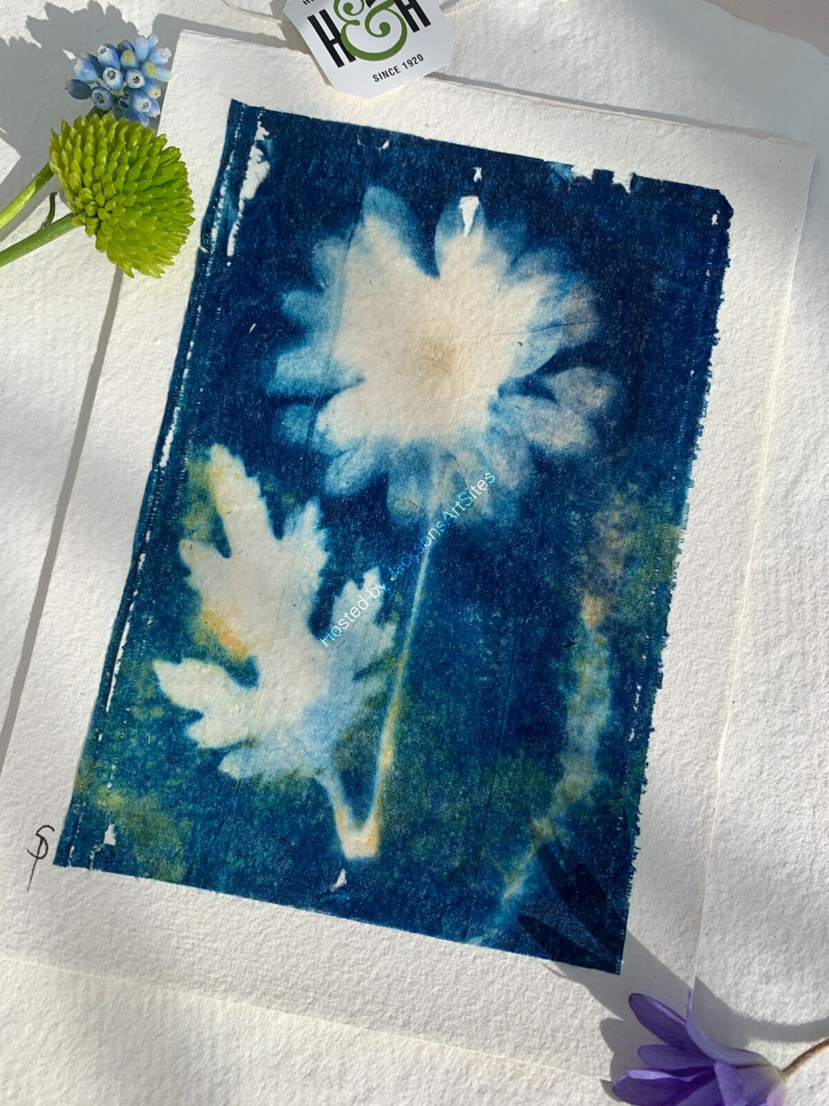 Original Cyanotype - Open Crysanthemum - Unframed