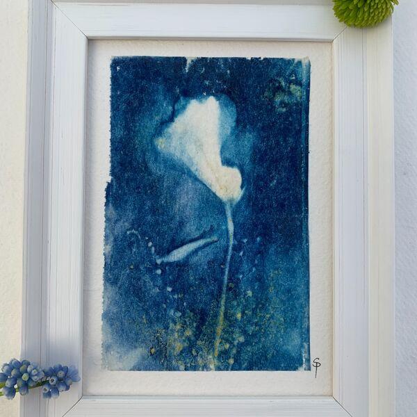 Peruvian Lily Framed
