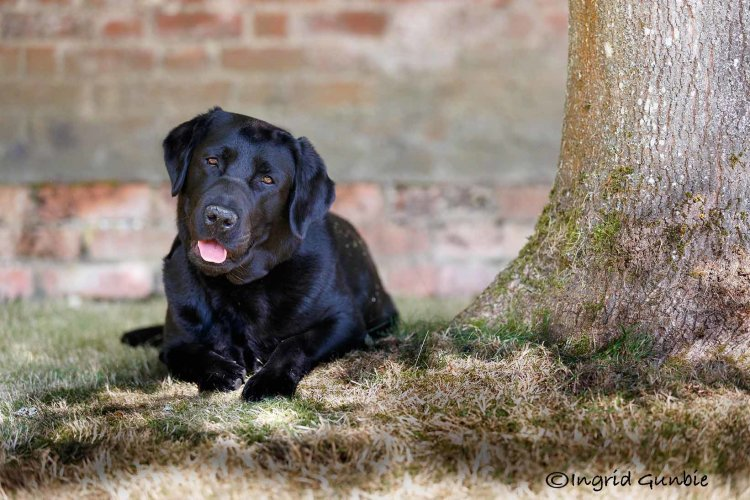 The Black Lab Collection