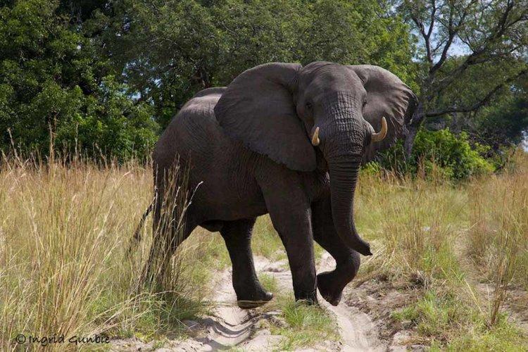Elephant crossing!