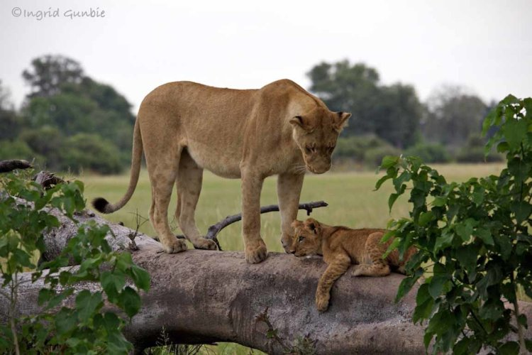 A proud mother
