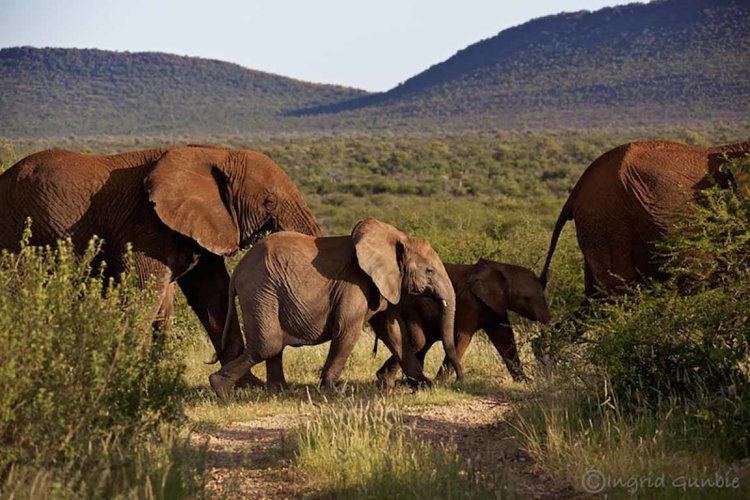 On the way to the waterhole!