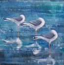 Herring Gulls - Print