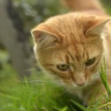 Animal - Cat (Felis catus) - Meet Curiousity