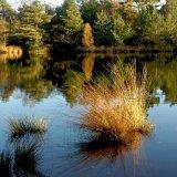 ENGLAND - Upper North Pond, near Shillinglee, Low Weald, Surrey (Upright)