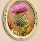 Flower - Spear or Bull Thistle (Cirsium vulgare) Flower of Scotland (in oval frame)