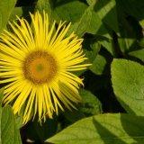 Flower - Yellow Flower