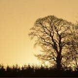 SCOTLAND - Evening Glow
