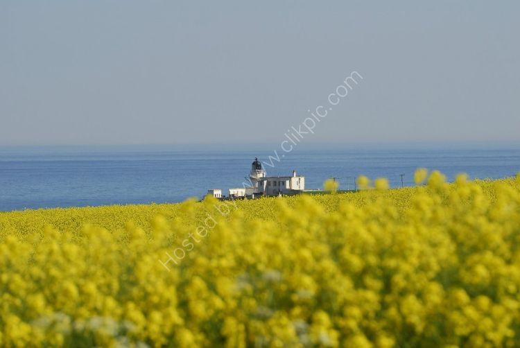 SCOTLAND - Todhead Lighthouse (Rape Seed Field)