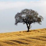 Tree - Autumn Harvest Tree